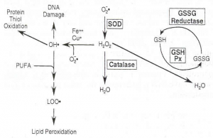 Oxidative stress and disease